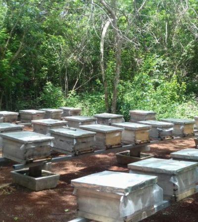 En riesgo de perderse, 500 toneladas de miel de exportación