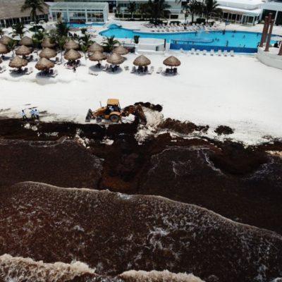 INUTILIZA EL SARGAZO PLAYAS DE QUINTANA ROO: Se agudiza el masivo recale de algas y ahuyenta al turismo; destinan 62 mdp para enfrentar la contingencia y limpiar arenales en 7 municipios
