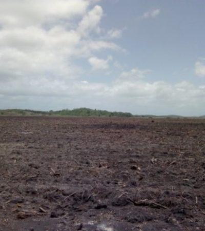 Con sobrevuelo se comprueba devastación de selva en OPB