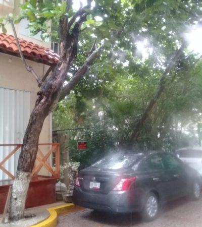 Por lluvias, tres árboles fueron serrados en el centro de Playa del Carmen