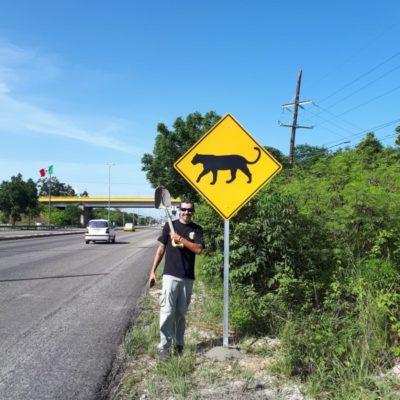 ¡CUIDADO!, ZONA DE JAGUARES PRÓXIMA: Colocan señalética para evitar atropellamientos de felinos en la carretera Cancún-Chetumal