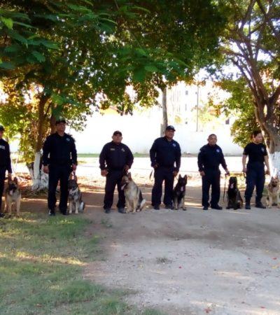 Ocho canes entrenados en Colombia se integran a los Binomios Caninos de SSP