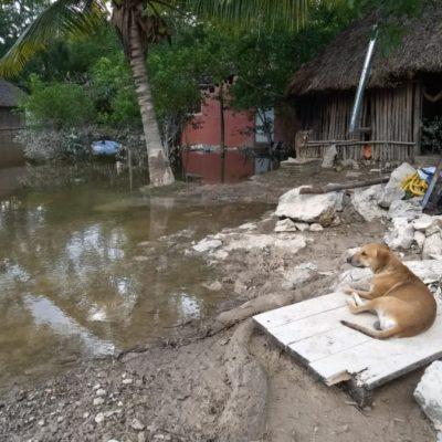 Sin luz y con pocos alimentos, Chumpón trata de recuperarse entre animales muertos flotando en el agua