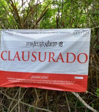 Proyecto hotelero de Greg Sánchez es clausurado por Profepa en Cozumel al dañar ecosistema costero