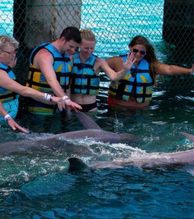 Involucrados en el negocio de los delfinarios dicen que los legisladores se han dejado presionar por activistas ambientales, pero que críticas no tienen evidencias científicas