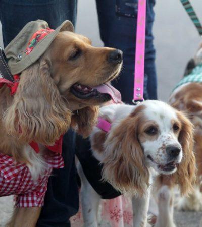 Organizan mega bazar 'pet friendly' para sensibilizar sobre el cuidado que requieren las mascotas y evitar fauna callejera, en Cancún