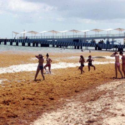 Recale masivo de sargazo puede afectar la temporada alta en la costa de Playa del Carmen