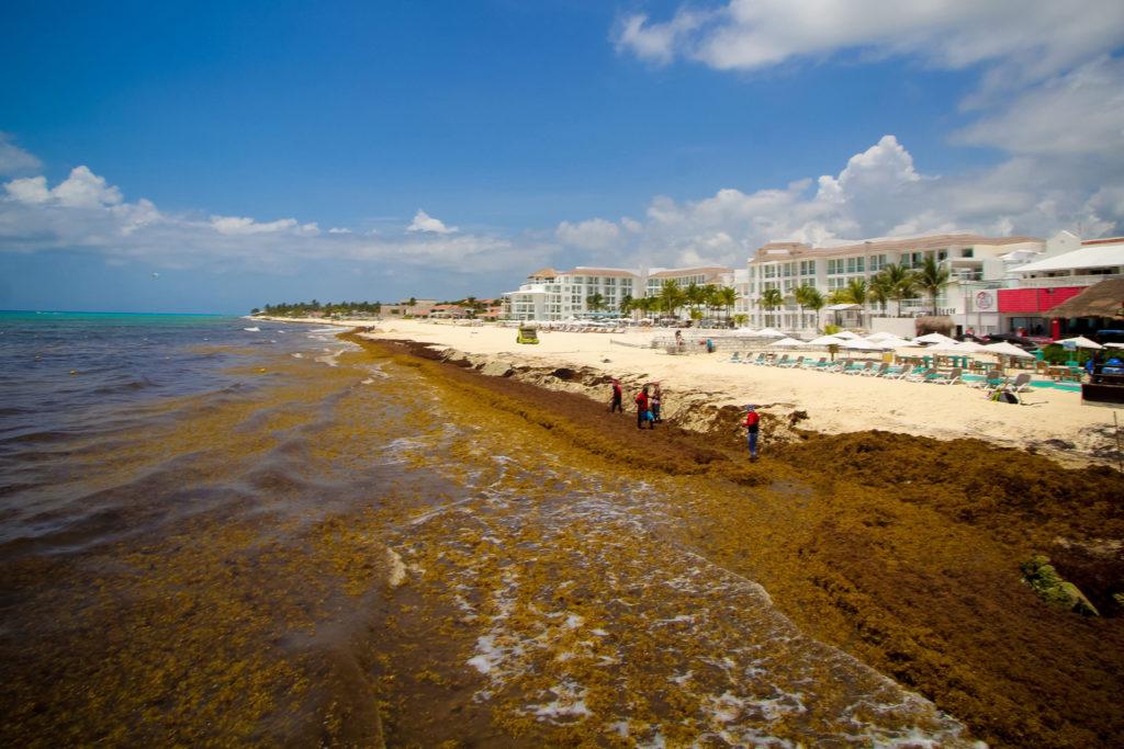 Se reactivan actividades turísticas en Playa del Carmen; más de mil 500 embarcaciones reanudan salidas al mar