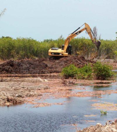 Organizaciones civiles exigen disculpas de Enrique de la Madrid y que Fonatur y Semarnat reforesten área impactada de Tajamar