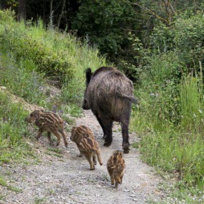 TEMEN EN TEKAX A CAZADORES FURTIVOS: Buscan especies que escaparon tras el cierre de centro de conservación animal