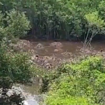 """""""No es nuestra competencia"""", responden autoridades municipales ante corte de manglar en Playa del Carmen"""