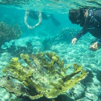 Snorkel, malas prácticas empresariales y el turismo masivo, principales destructores de arrecifes de coral en Akumal