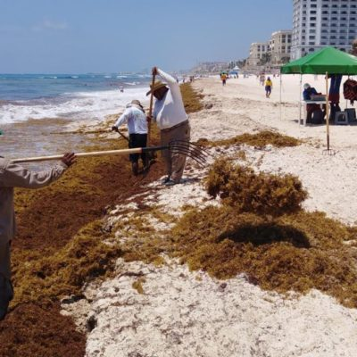 Recolectan casi tres mil toneladas de sargazo en 13 playas de Cancún
