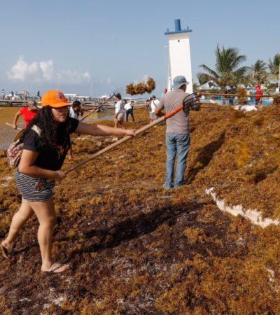 Autoridades de Puerto Morelos trabajan para combatir arribo masivo de sargazo