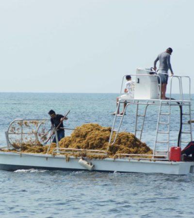 Ayuntamiento de Puerto Morelos redobla esfuerzos para hacer frente al sargazo; un catamarán adaptado recolecta hasta una tonelada diaria del alga