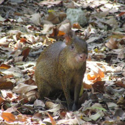 El Instituto de Biodiversidad y Áreas Naturales Protegidas pide a Profepa que intervenga para prevenir la caza furtiva en Xcacel-Xcacelito