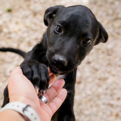 Se suman asociaciones civiles y gobierno para proteger a los animales y crear una cultura de bienestar y trato digno en QR