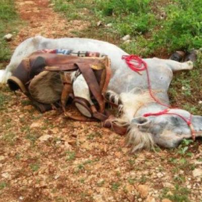 MATA RAYO A UN CORCEL: Jinete salva la vida aunque sufre lesión craneal al caer de su montura