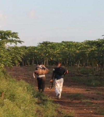 Ejidatarios de Kantunilkín, urgen a las autoridades actuar por persistencia de caza furtiva de venados y jabalíes