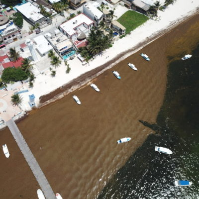 EL IMPACTO DEL SARGAZO: Recale de algas afecta prácticamente todo el litoral de Quintana Roo y en Puerto Morelos se libra una dura batalla en su contra