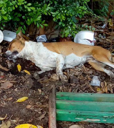 Exigen vecinos castigar a envenenadores de mascotas en el barrio San Luisito de Calkiní