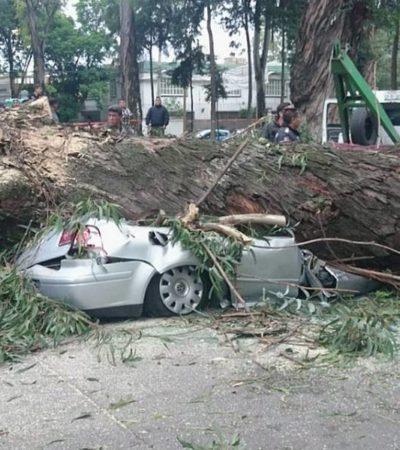 Se desploma árbol de eucalipto, aplasta auto y mata a cuatro integrantes de una familia en Naucalpan