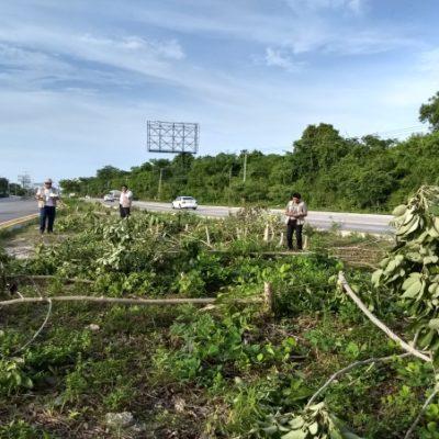 Verifica Profepa tala de 134 árboles en la carretera Puerto Morelos-Playa del Carmen