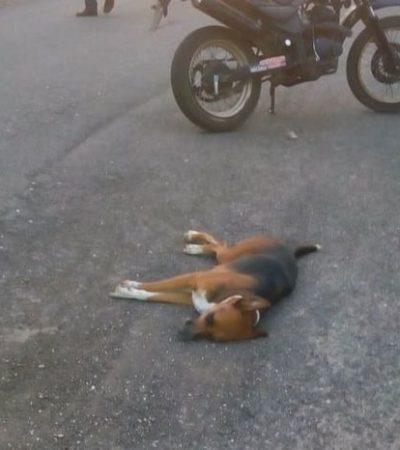 Muere al caer de su moto luego de chocar con un perro en la carretera