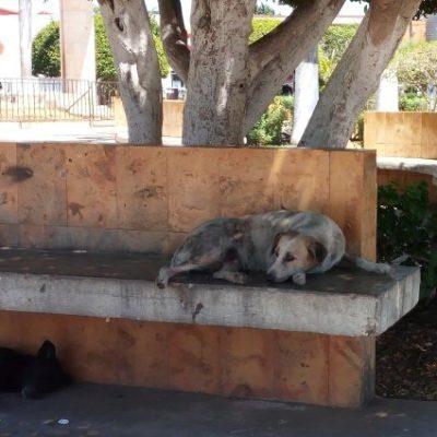 Se 'apropian' canes de las bancas en parque de Hecelchakán, Campeche