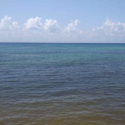 ARRIBAZÓN IMPARABLE. Los náuticos de Playa del Carmen consideran la limpieza de costas de sargazo como una prioridad