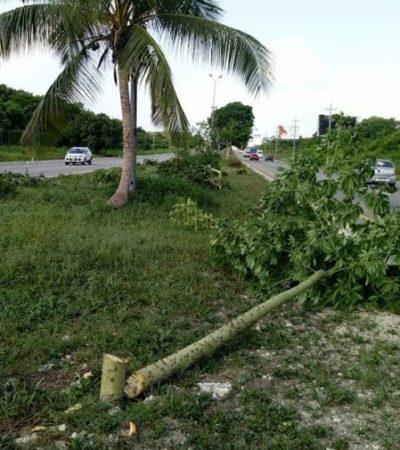 La Asociación Mexicana de Arboricultura denunció la tala de 304 árboles en Playa del Carmen; exigen que se aplique la ley para los infractores