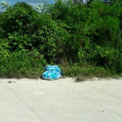 Hallan cuerpo descuartizado envuelto en sábanas en la Ruta de los Cenotes de Puerto Morelos