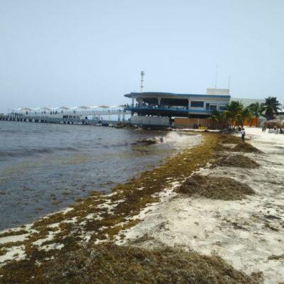 El sargazo no deja de anegar las costas de Playa del Carmen
