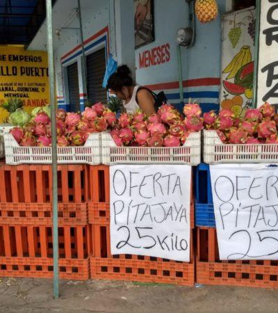 De 45 a 20 pesos baja el precio del kilo de pitahaya y productores venden su cosecha para evitar más perdidas
