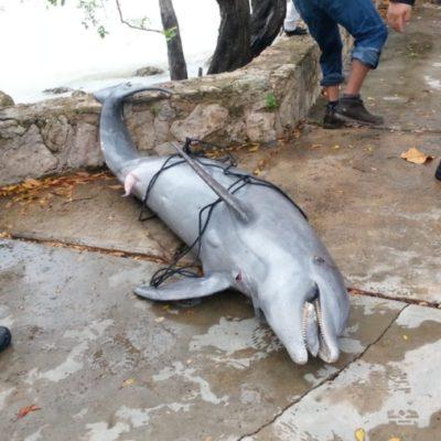 ASOMBRO Y DUDAS: Un delfín muerto aparece en Bahía Chetumal, cerca del Congreso del Estado