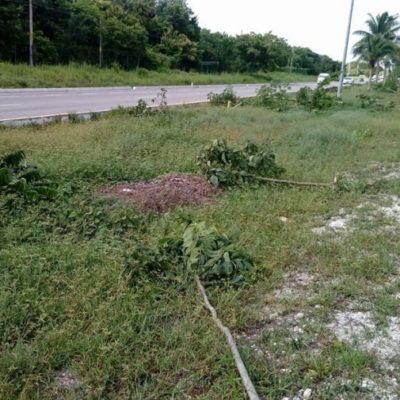 La tala de 304 árboles en los límites de Puerto Morelos y Solidaridad es denunciada por la Asociación Mexicana de Arboricultura del Sureste