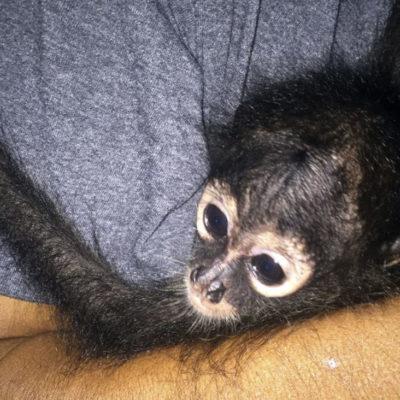 Participarán especialistas en bienestar animal de Quintana Roo en el Latinzoo en la CDMX