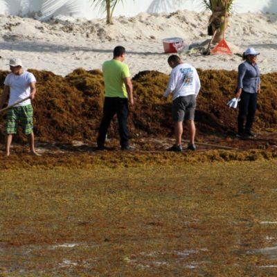 Por recale masivo de sargazo, en Puerto Morelos ofrecen actividades alternas a turistas