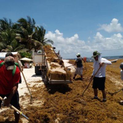 Intensifican trabajo para enfrentar la contingencia del sargazo en Puerto Morelos