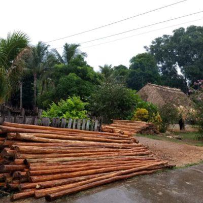 La conservación de hectáreas de selva en el ejido Santa María Poniente, beneficia a campesinos al crear empleos