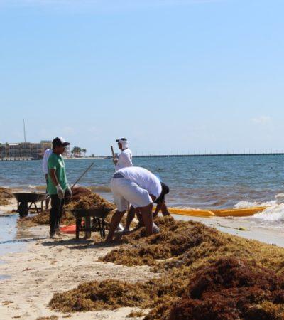 FALLA LA PRIMERA LÍNEA DE DEFENSA CONTRA EL SARGAZO: El alga cruza las barreras colocadas en playa Caribe y recala más de una tonelada; empresarios y bañistas dudan de su funcionalidad