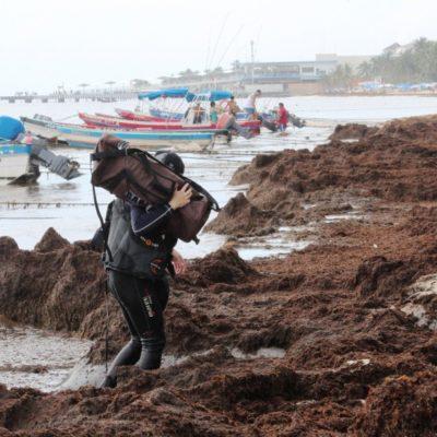 Empresarios del sector turístico en Playa del Carmen trabajan entre sargazo y reportan baja ocupación por presencia del alga