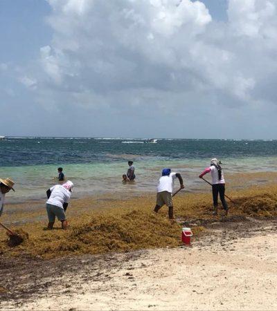 Combate Gobierno la crisis del sargazo con fuerte promoción de limpieza de playas