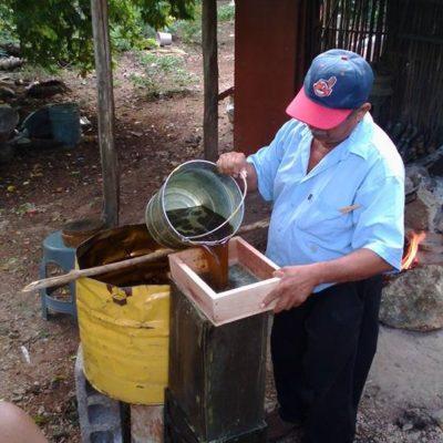 Clima favoreció a apicultores, aunque mantienen lucha contra transgénicos