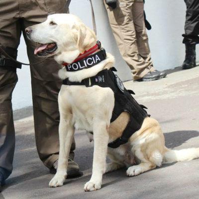 Arriban elementos y canes de la PGR a Tabasco para apoyar indagación de fosas clandestinas