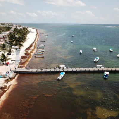 ACARREAN SARGAZO A LA RUTA DE LOS CENOTES: Limpian playas en Puerto Morelos ante el recale masivo de algas, pero empresarios se quejan del destino final