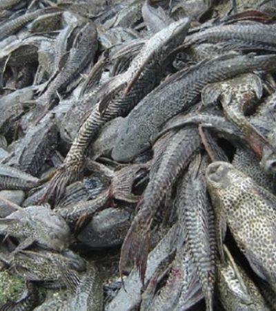 Alarmante mortandad del 'pez diablo' en río Palizada de Campeche