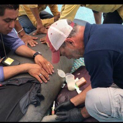 Rescatan quintanarroenses tres manatíes en Tabasco