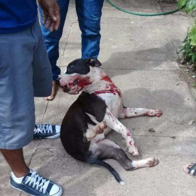 Denuncian que policías ministeriales dispararon contra un perro en Playa del Carmen