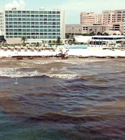 PREOCUPACIÓN NACIONAL POR EL SARGAZO: Instala UNAM comité científico para atender arribazón atípica de algas a playas de Quintana Roo